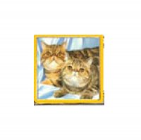 Cat - 2 tabby cats 9mm Italian charm